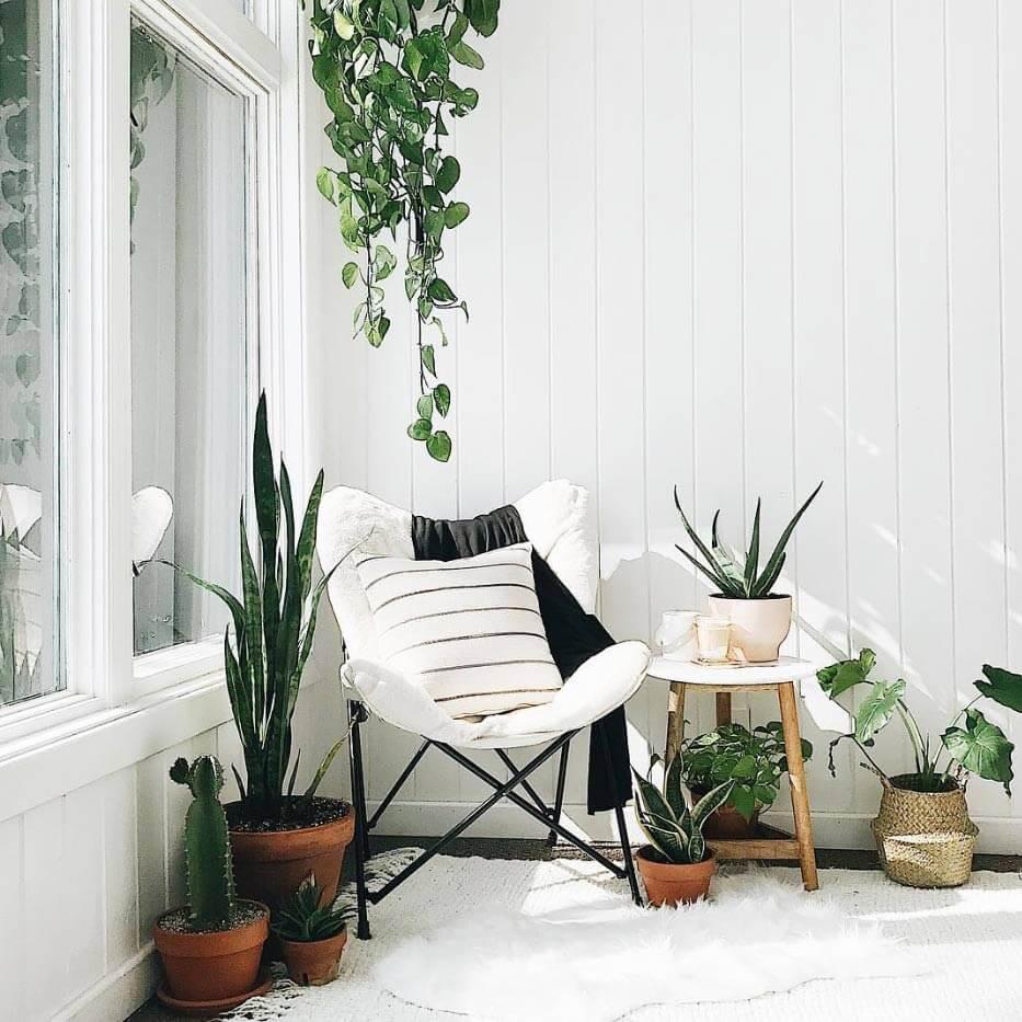 trang trí nội thất bằng cây xanh