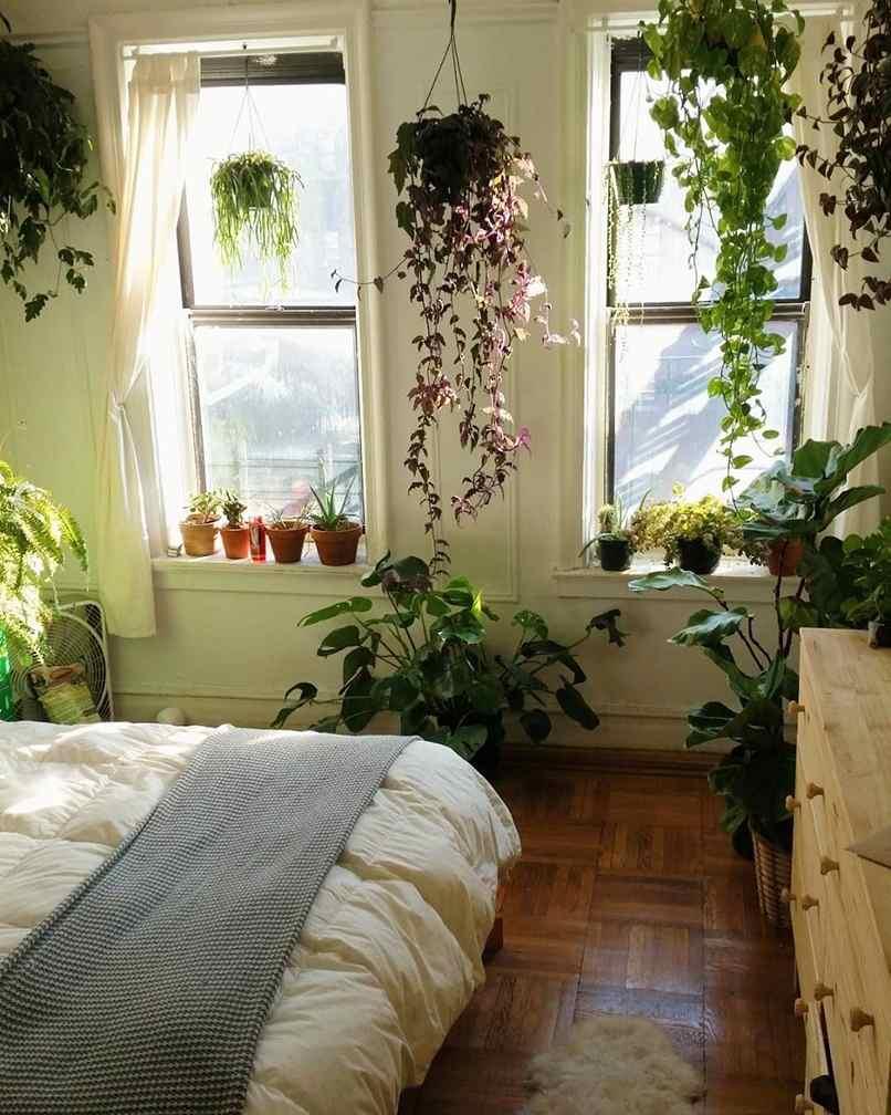 Trồng cây trong phòng ngủ