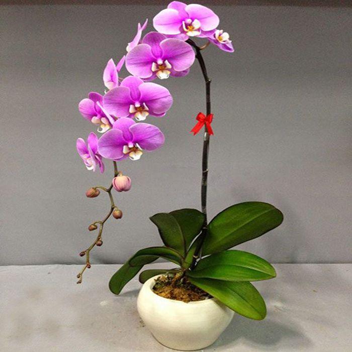 Hoa De Ban Lam Viec Theo Phong Thuy (1)