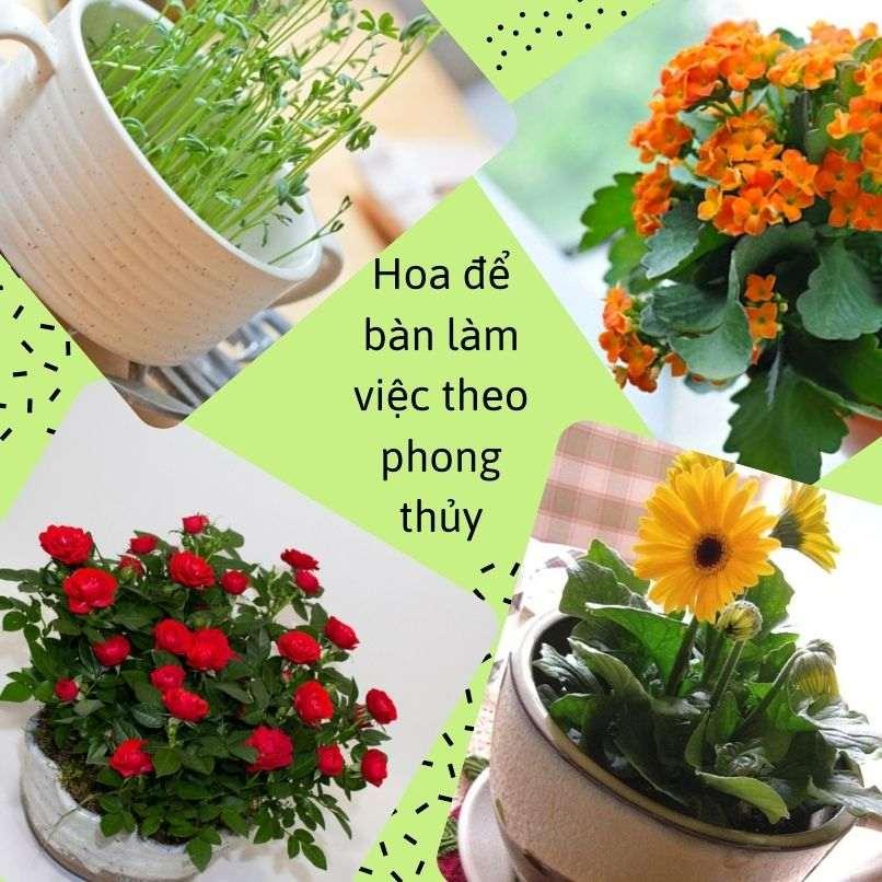 Hoa De Ban Phong Thuy (4)
