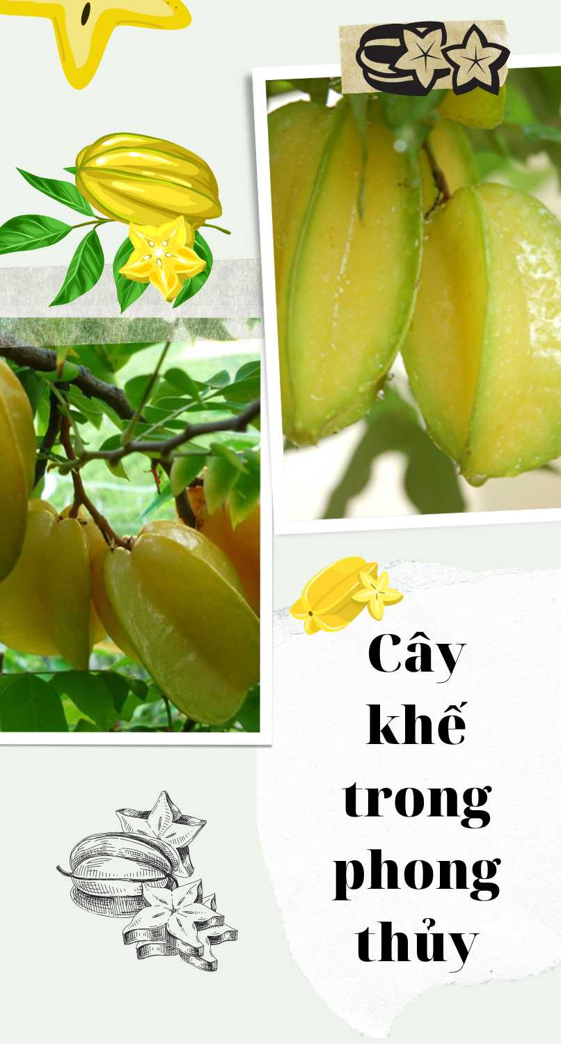 Cay Khe Trong Phong Thuy (1)