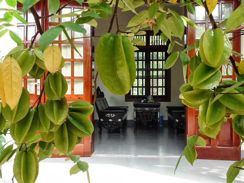 Cay Khe Trong Phong Thuy (4)