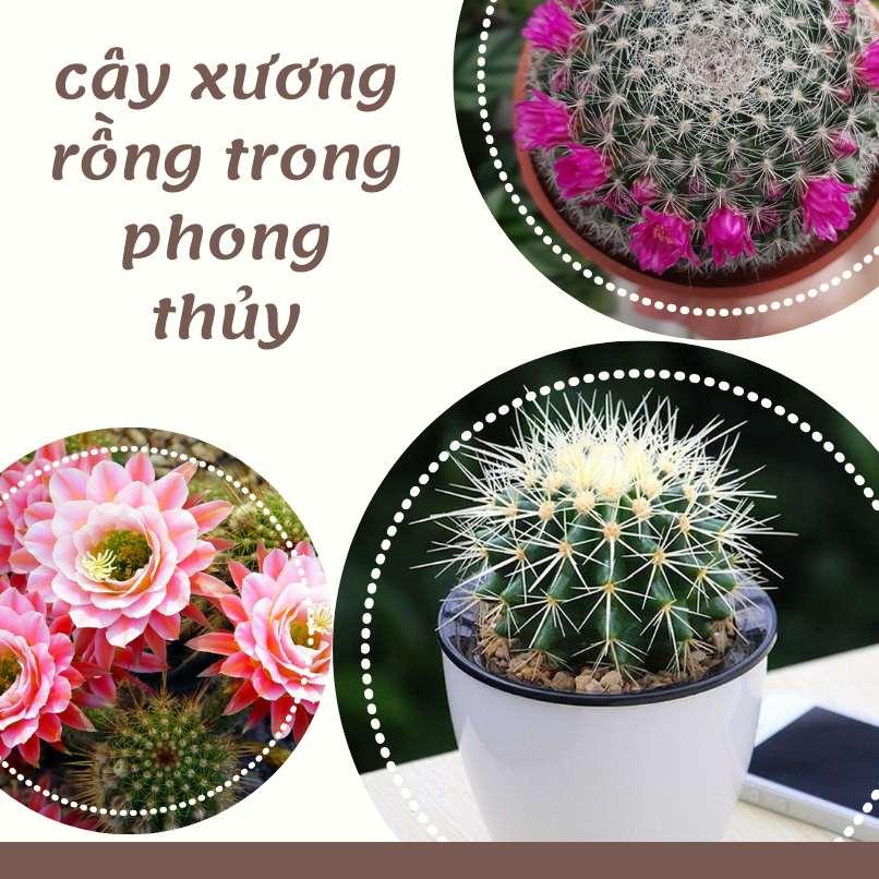 Cay Xuong Rong Trong Phong Thuy (1)